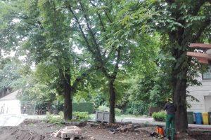Margit körúti fák